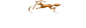 used motorcycles in glenview | used harley davidson bikes| chicago